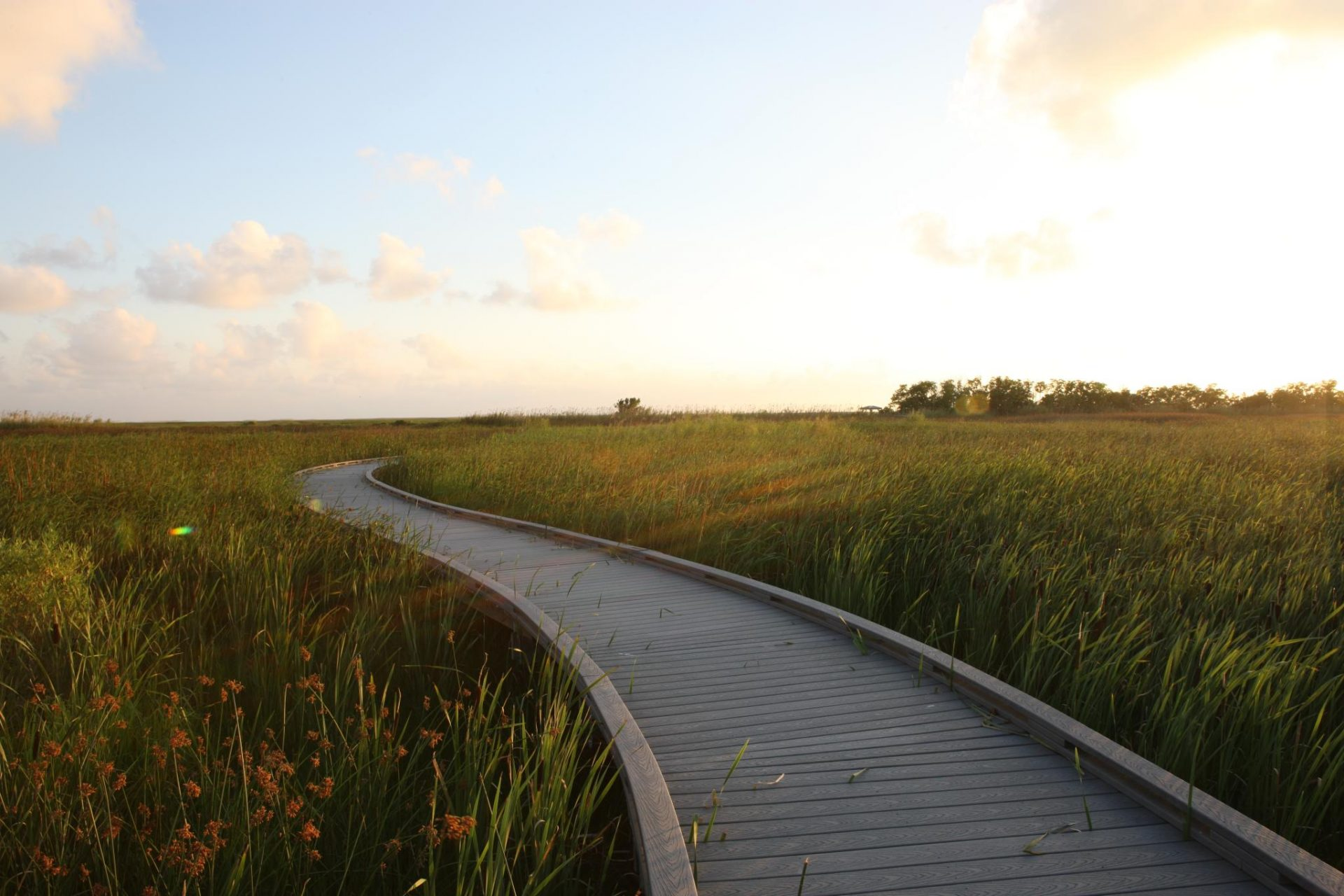 9 Spectacular Boardwalk Trails In Louisiana Perfect For An Afternoon Stroll